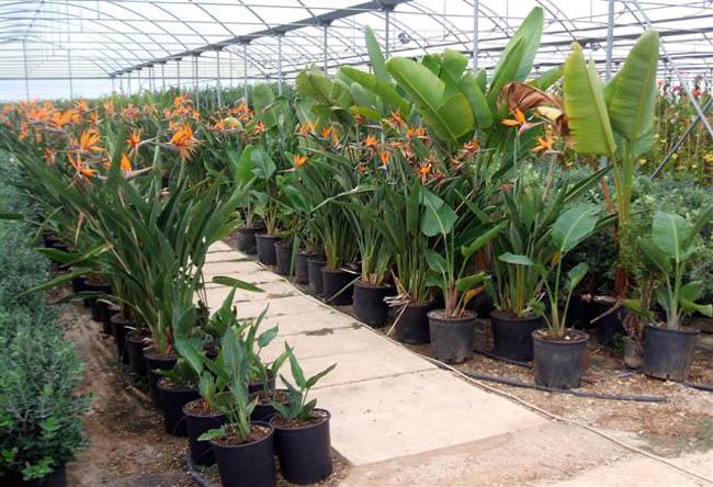 Piante Mediterranee Selvatiche : Na di vivai vivaio produzione e vendita piante